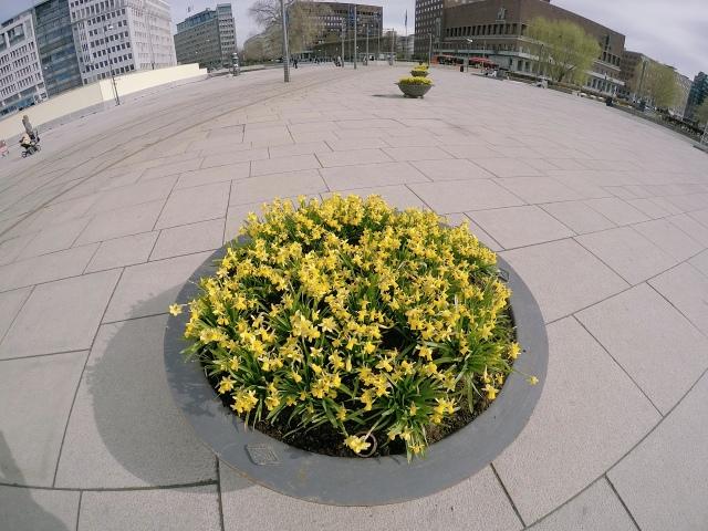 Spring flowers at Aker Byrgge
