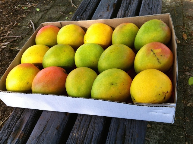 A tray of mangos becomes...