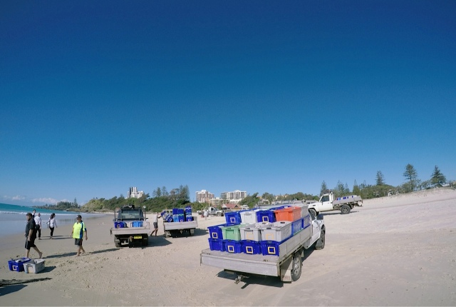 Beach scene with trucks and people and plastic crates for carting fish.