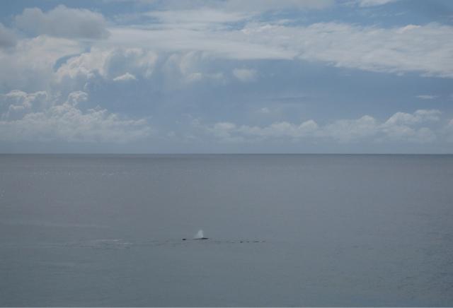 Whale goodbye.