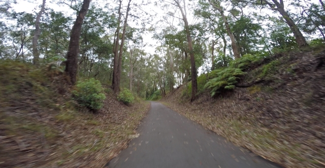 Bushland trail near Griffith University Gold Coast campus.