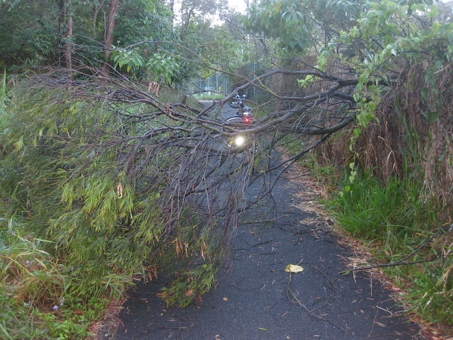Tree blocking the pathway after the storm.
