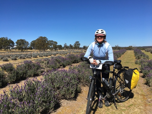 Lavender Farm for morning tea