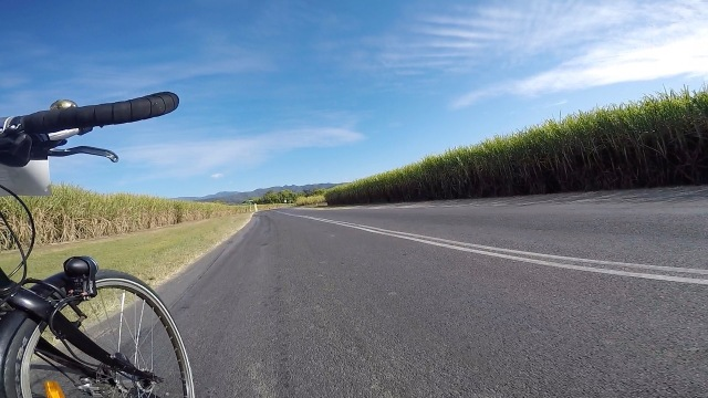 Riding past canefields in Tweed Valley.